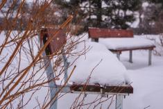 Čermná v zimě